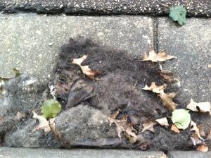 dead_kitten